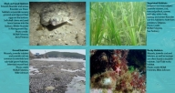 Report Shows Importance of Shallow-Water Habitat